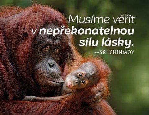 Chinmoy Sri: Magnet na lednici - Musíme věřit v nepřekonatelnou sílu lásky.