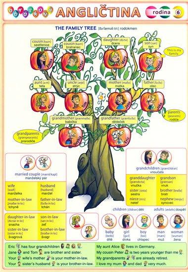 Kupka Petr a kolektiv: Obrázková angličtina 6 - Rodina