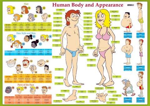 Tinková Eva: Human Body and Appearance / Lidské tělo - Naučná karta