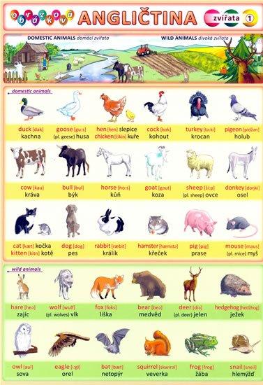 Kupka Petr a kolektiv: Obrázková angličtina 1 -  Zvířata