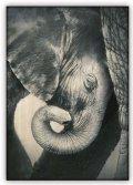 neuveden: Obraz: Little Elephant (340x485)