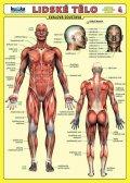 Kupka Petr a kolektiv: Lidské tělo - Přehled orgánových soustav - Svalová soustava