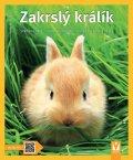 Weglerová Monika: Zakrslý králík - Jak na to
