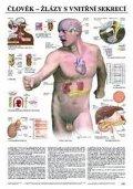 neuveden: Plakát - Člověk - žlázy  s vnitřní sekrecí