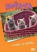 neuveden: Koťata - DVD